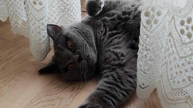 кошка Ника