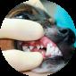 Лечение зубов у собак